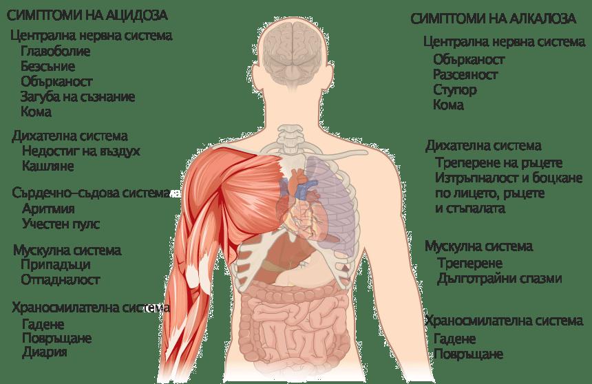 Ацидоза и алкалоза