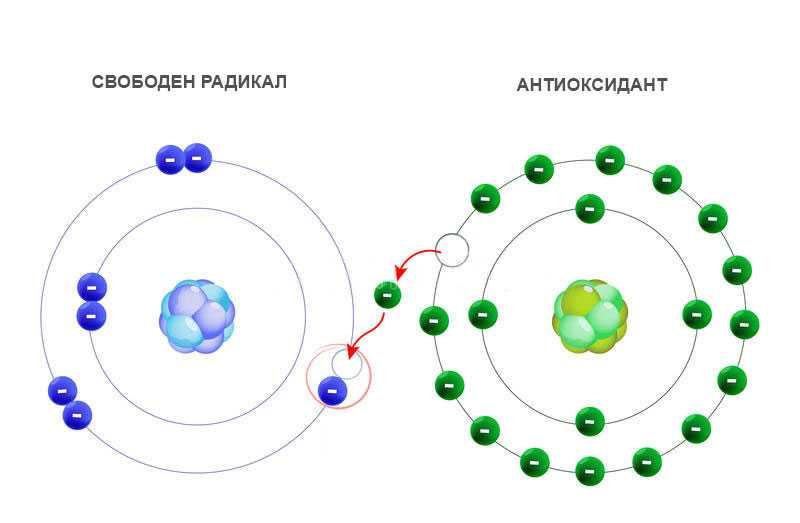 Свободни радикали и антиоксиданти