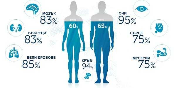 съдържание на вода в тялото